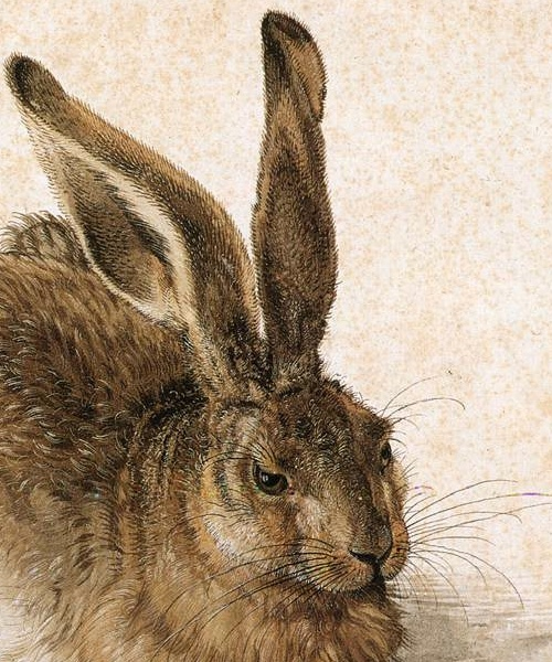 durer_young_hare3